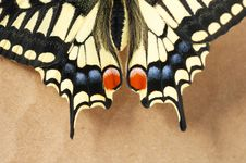 Free Part Butterfly Stock Image - 4679151