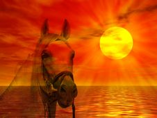 Free Horse Portrait In The Sunset Stock Image - 4679221