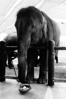 Free Beg For The Elephant Royalty Free Stock Photos - 4679528