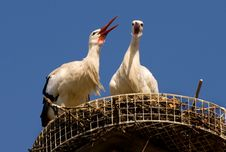 Free Two Storks Royalty Free Stock Images - 4679619