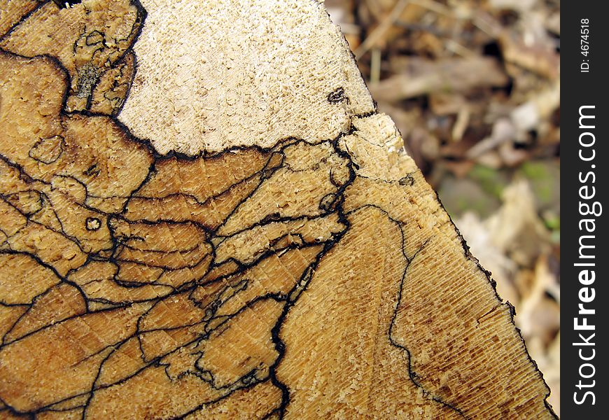 Spalted Wood Background Free Stock Images Photos 4674518