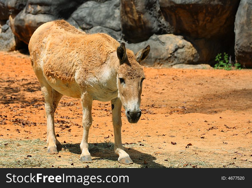 fat donkey free stock images photos 4677520 stockfreeimages com