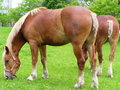 Free Horses Royalty Free Stock Photography - 4683397