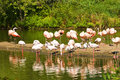 Free Flamingos At Lake Stock Image - 4686111