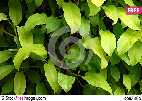 Free Shade Plant Royalty Free Stock Image - 4687486