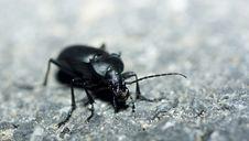 Free Bug Royalty Free Stock Photography - 4680337