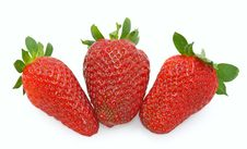 Free Strawberries Stock Photography - 4680832