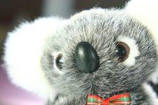 Free Koala Royalty Free Stock Images - 4681159