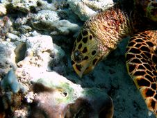 Hawksbill Turtle Detail Royalty Free Stock Photos