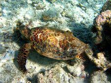 Free Turtle Royalty Free Stock Photo - 4681215