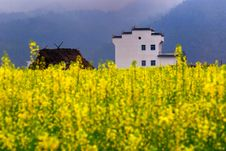 Houses In Goden Yellow Cole Field Stock Photography