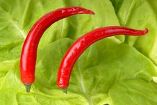 Free Two Peppers And Lettuce Background Stock Images - 4682764