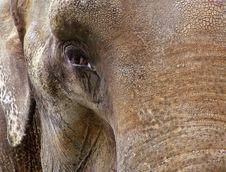 Free Old Elephant Stock Photography - 4683462