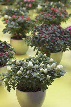 Free Flower Expo Stock Photos - 4683473