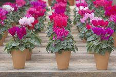 Free Flower Expo Stock Photo - 4683510