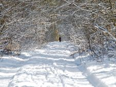 Man Walking Alone In White Snowy Forest Trail Royalty Free Stock Images