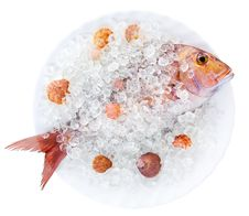 Free Gilthead In Ice Stock Image - 4684871