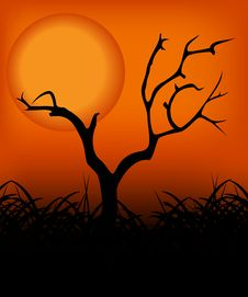 Free Tree In The Sunset 02 Royalty Free Stock Photos - 4685708