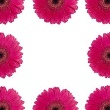 Free Red Gerberas Royalty Free Stock Images - 4685749