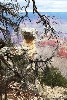 Free Tree In Grand Canyon NP Stock Image - 4685811