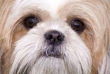 Free Dog Face. Stock Image - 4685851