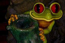 Free Frog Stock Photos - 4686403