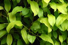 Shade Plant Royalty Free Stock Image
