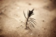 Free Feather In Sand Stock Photo - 4687610