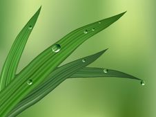 Free Green Leaf With Dewdrops Royalty Free Stock Photo - 4688145