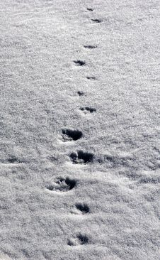 Free Winter Path Royalty Free Stock Photography - 4688537