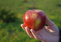 Free Female Hand Holding An Apple Royalty Free Stock Image - 46811426