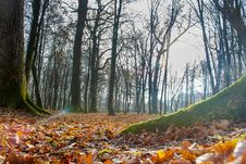 Free Autumn In The Forest Stock Photo - 46811440