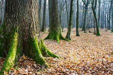Free Autumn Forest Royalty Free Stock Photo - 46811445