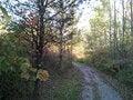 Free Autumn Walk Golden Hour Stock Images - 46820354
