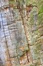 Free Tree Bark Texture Stock Photo - 4694420