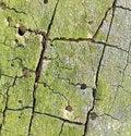 Free Tree Bark Texture Royalty Free Stock Photography - 4694477