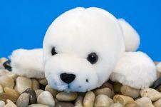 Baby Seal Royalty Free Stock Photos