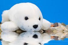Baby Seal Royalty Free Stock Image