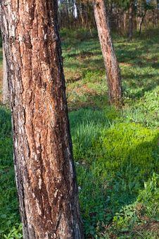 Free Tree Stock Image - 4693001