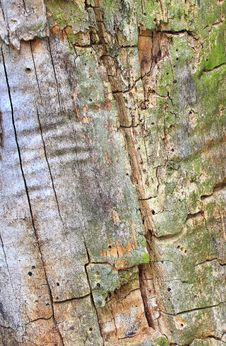 Free Tree Bark Texture Stock Photo - 4694420