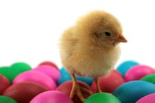 Chichen And Easter Eggs Stock Images