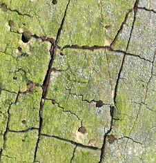 Free Tree Bark Texture Royalty Free Stock Photography - 4694477