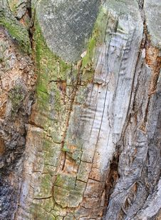 Free Tree Bark Texture Royalty Free Stock Photos - 4694478