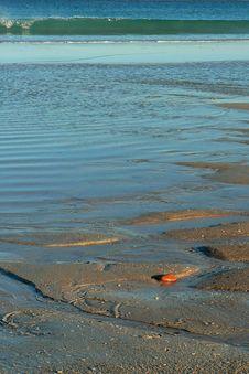 Pebble On A Beach Stock Photography