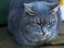 Free Cat Royalty Free Stock Images - 4694989