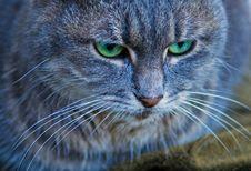 Free Cat Royalty Free Stock Photo - 4695005