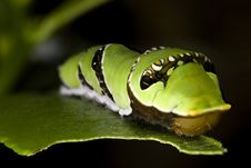 Free Caterpillar Close Up Macro Stock Photos - 4695213