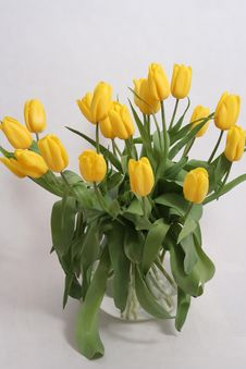 Free Bouquet Yellow Tulips Stock Photography - 4695312