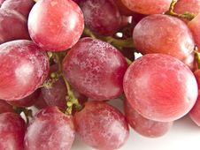 Free Red Grapes Royalty Free Stock Images - 4695799