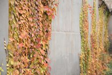 Free Autumn Stock Photo - 4697050